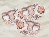 Leopárd kő
